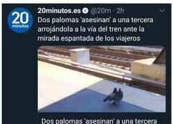 Enlace a La mafia de las palomas ataca de nuevo