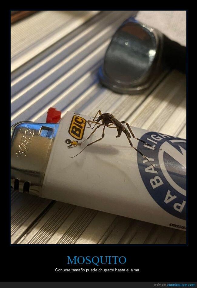 grande,mosquito,wtf