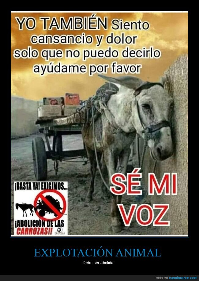 burro,carro,maltrato animal
