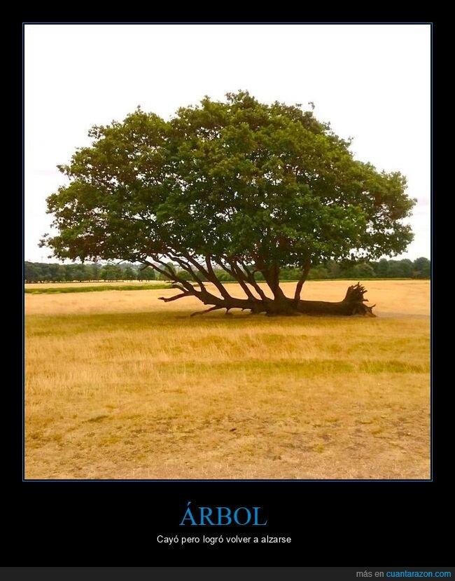 árbol,car,crecer