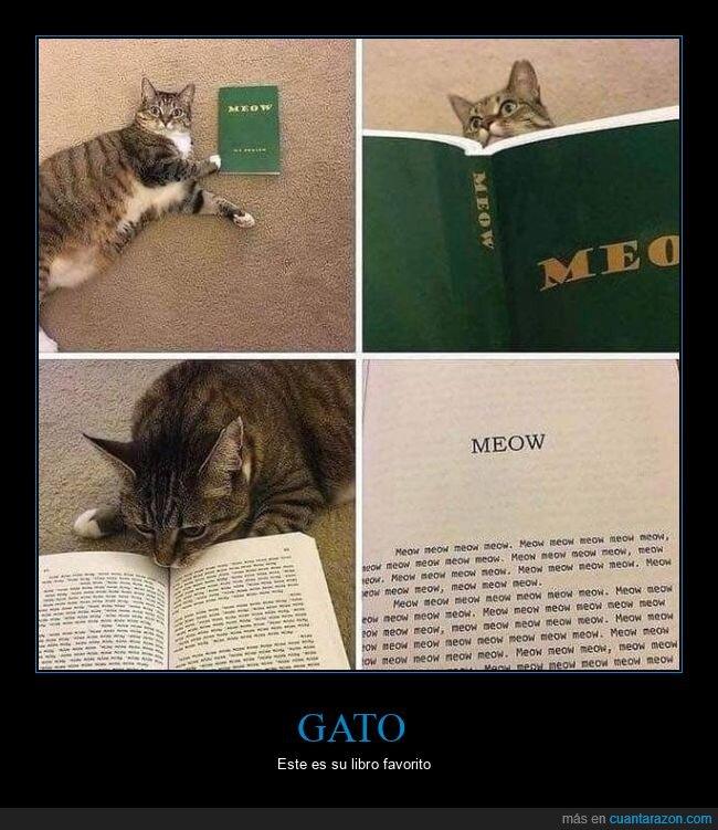 gato,libro,meow