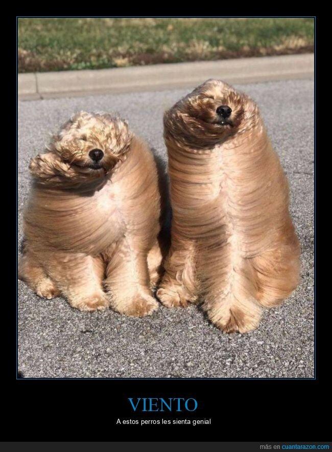pelo,perros,viento