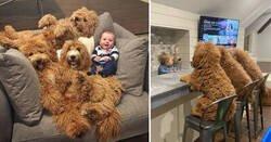 Enlace a Imágenes que relatan la amistad de un bebé y unos perros que llevan siendo amigos toda la vida
