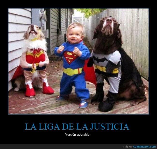 batman,bebé,disfraces,perros,superman,wonder woman