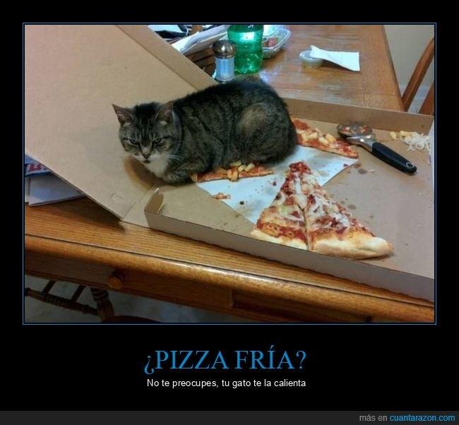 gato,pizza,wtf