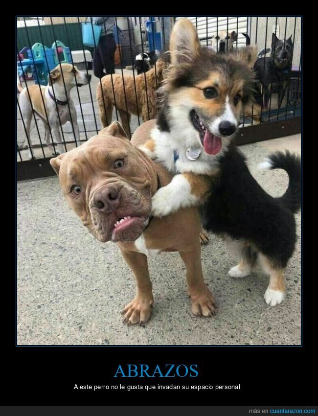 abrazo,cara,perro