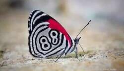 Enlace a Mariposa numerada