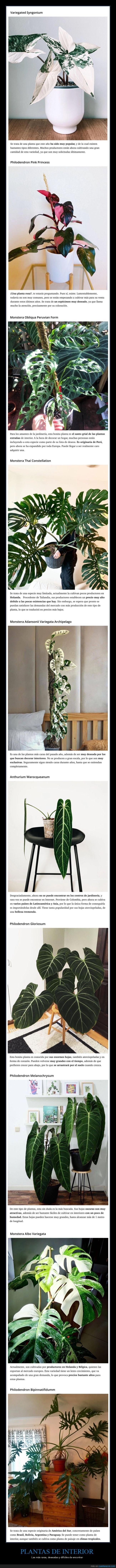 curiosidades,plantas de interior,raras
