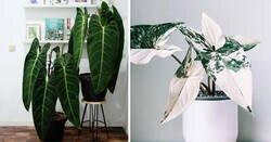 Enlace a Las 10 plantas de interior más raras, deseadas y difíciles de encontrar