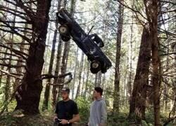 Enlace a Paseando por el bosque