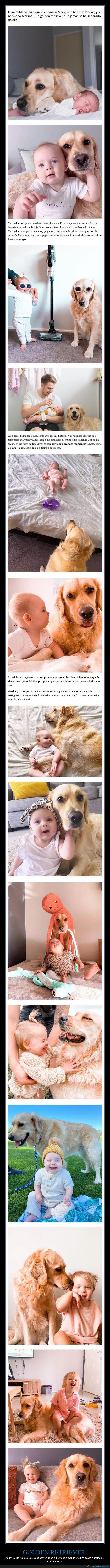 hermano mayor,niña,perro