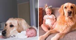 Enlace a Imágenes que relatan cómo un golden retriever se ha convertido en el hermano mayor de una niña desde el momento en el que nació