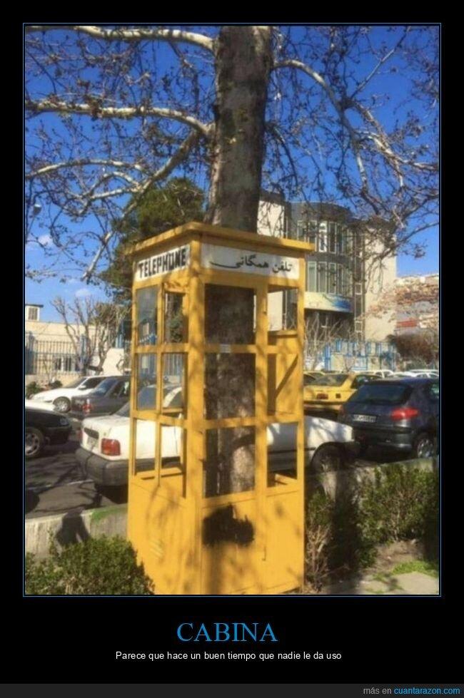 árbol,cabina telefónica,wtf