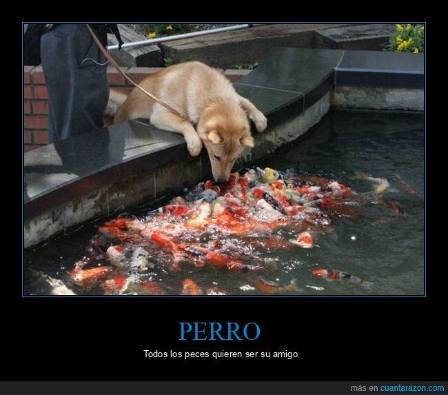 peces,perro,wtf