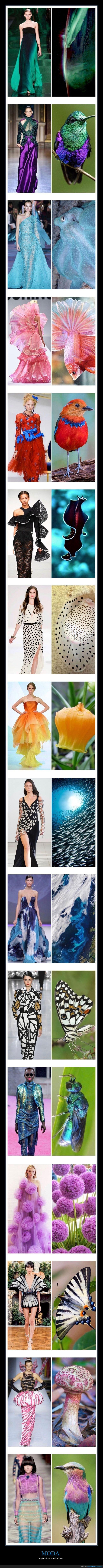inspirada,moda,naturaleza
