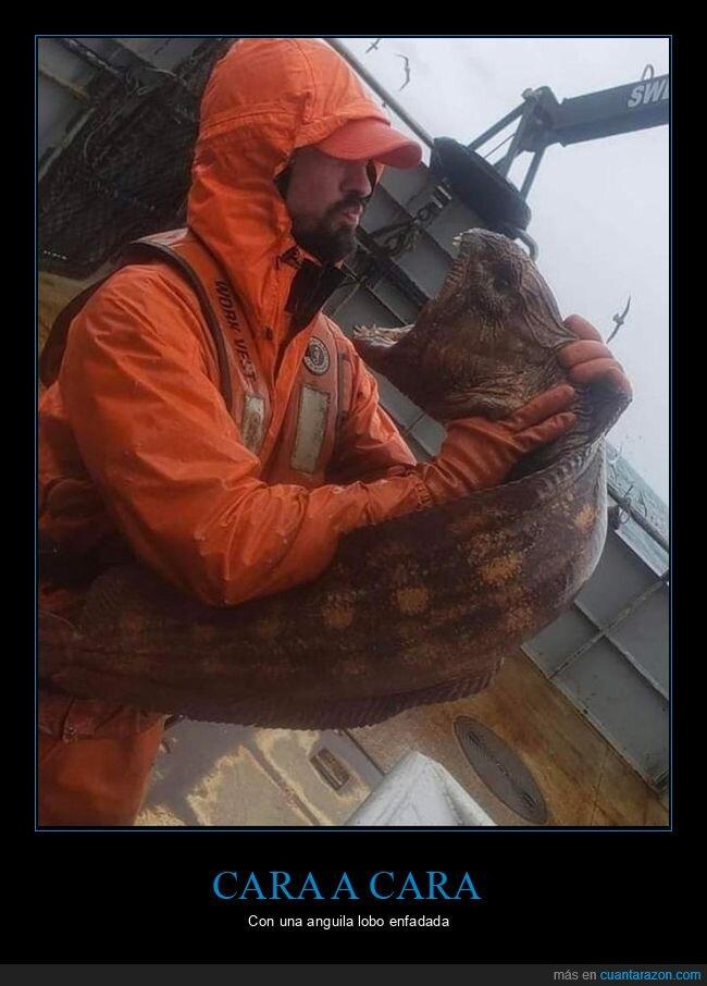 anguila lobo,pescador