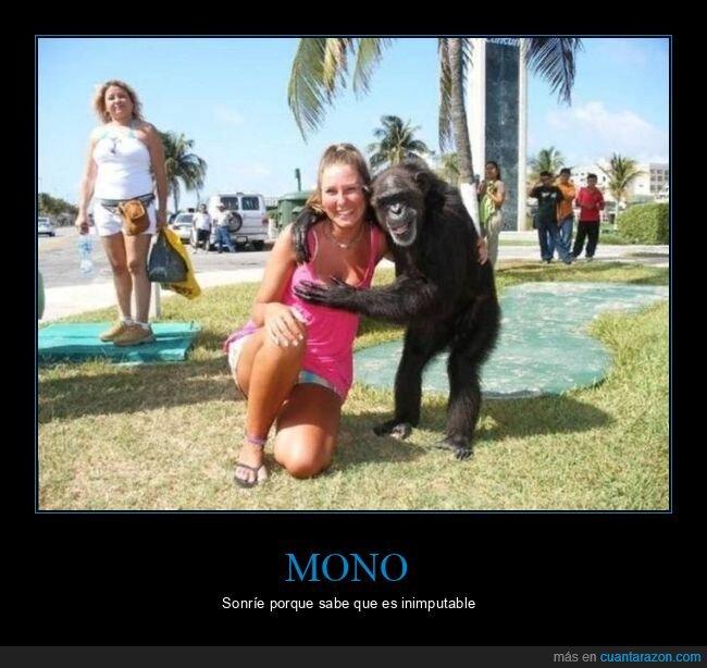 mono,tocando