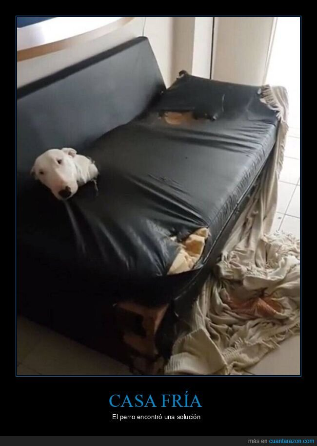 fails,perro,sofá