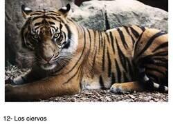 Enlace a Los animales más mortíferos que acaban con más humanos cada año