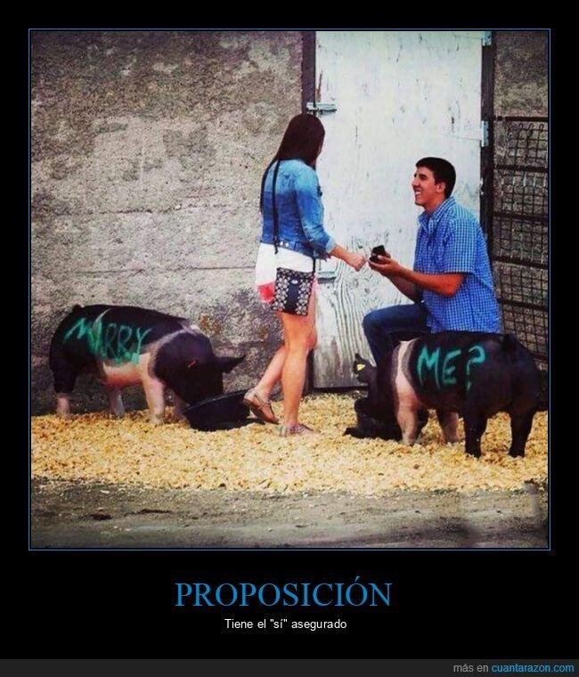 cerdos,proposición,wtf