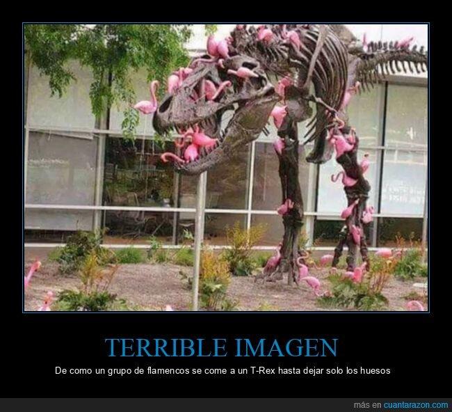 flamencos,huesos,tiranosaurio rex