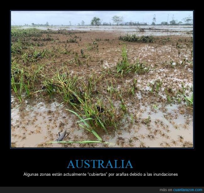 arañas,australia,inundaciones