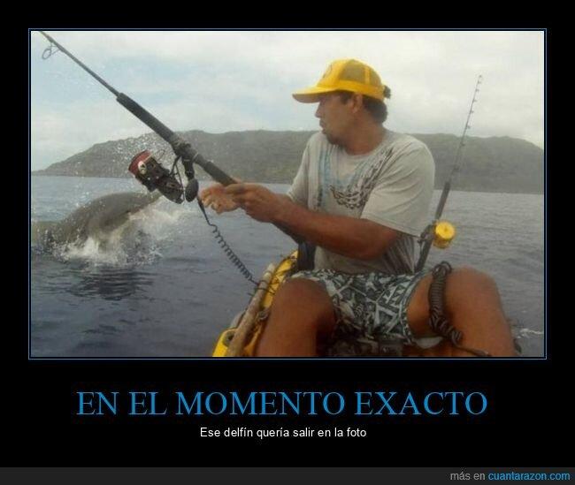 delfín,foto,momento exacto