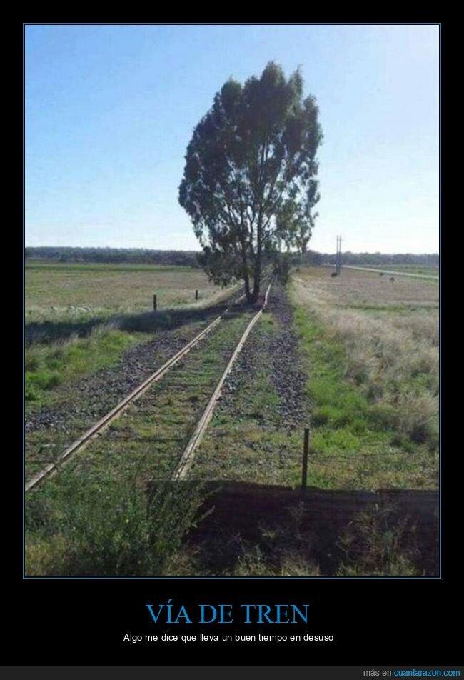 árbol,vía de tren,wtf