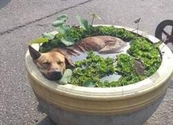 Enlace a Necesita más perro