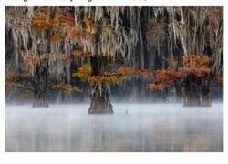 Enlace a Imágenes ganadoras del Certamen Internacional de Fotografía de Naturaleza