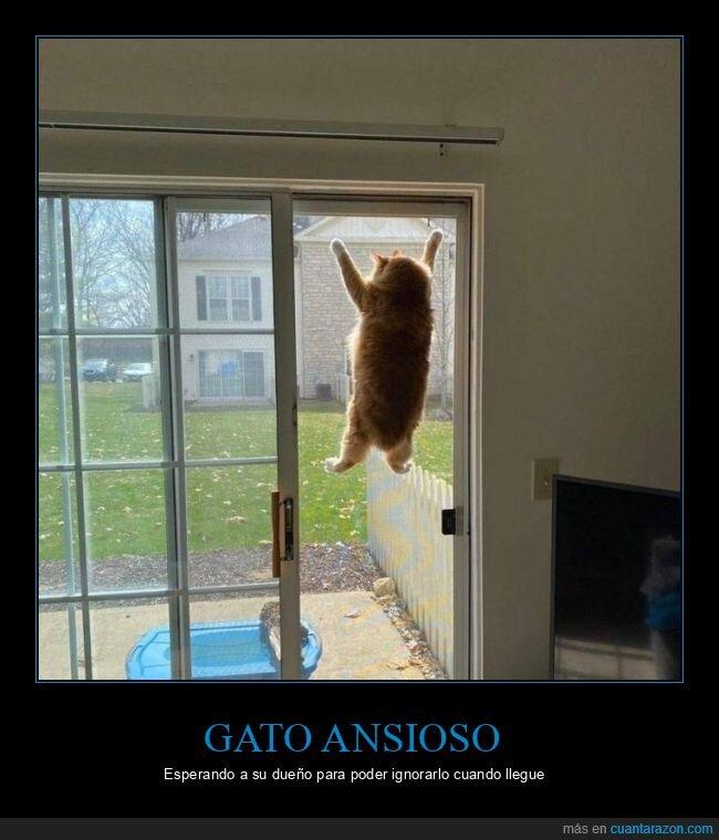gato,puerta,wtf