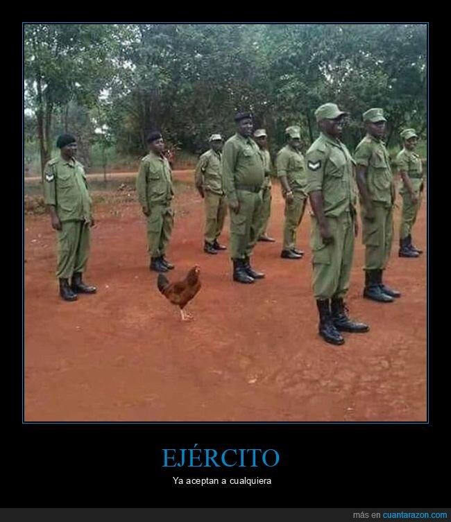 ejército,gallina,soldados,wtf