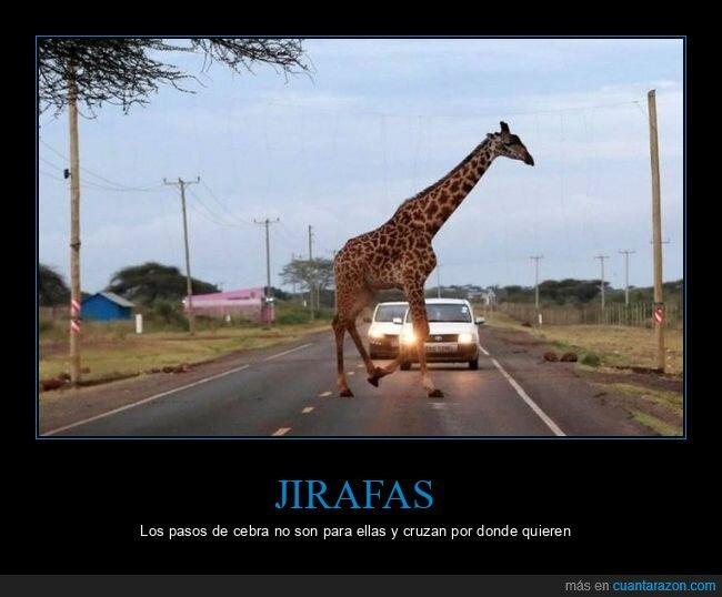 carretera,cruzando,jirafa