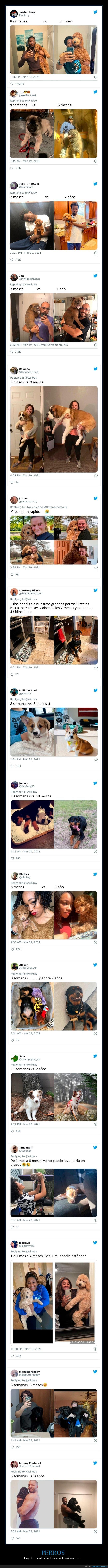 antes,crecer,después,perros