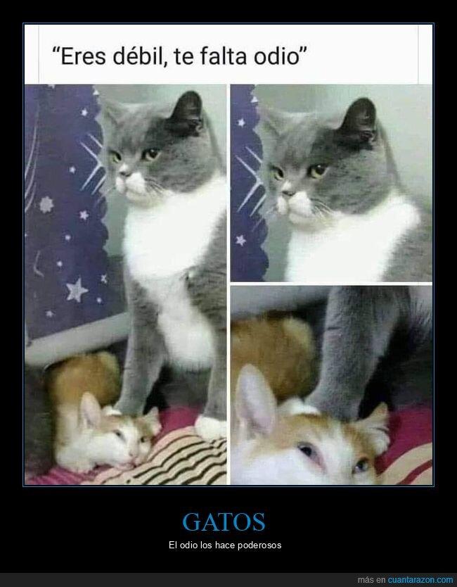 débil,gatos,odio