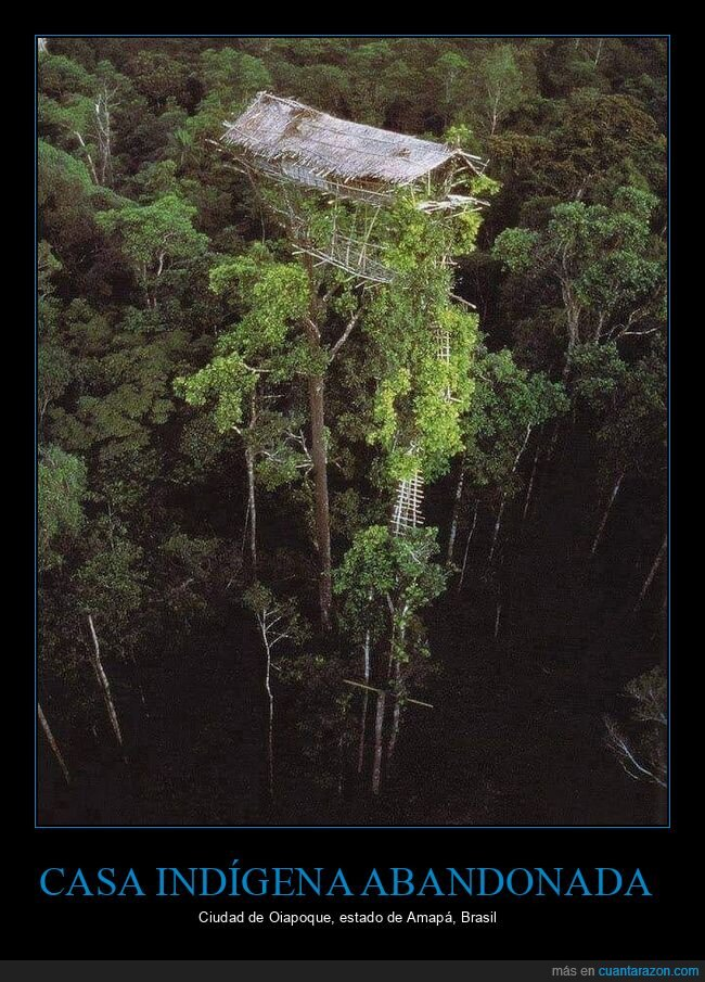 árbol,brasil,casa indígena
