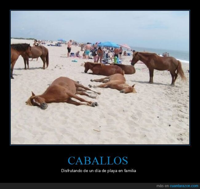 caballos,playa,wtf