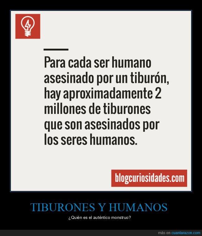 asesinados,seres humanos,tiburones