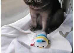 """Enlace a Esta mujer adoptó a una gata que fue ignorada en el refugio por su aspecto """"feo"""""""