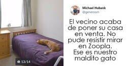 """Enlace a Tuits de """"Este es mi gato, pero esta no es mi casa"""" y """"Esta es mi casa, pero este no es mi gato"""""""