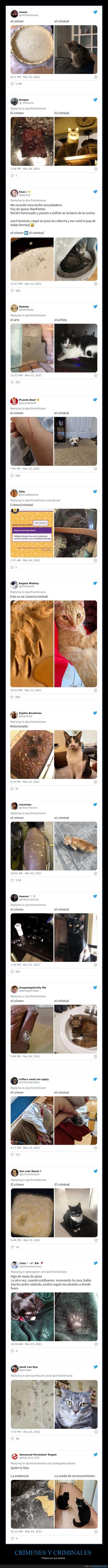 crímenes,criminales,gatos,pillados