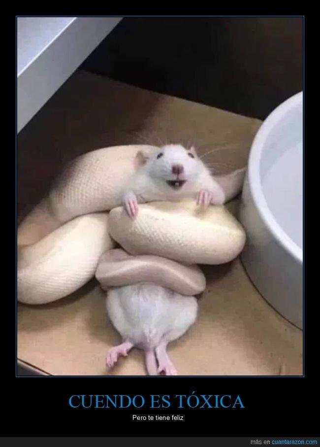 feliz,ratón,serpiente,tóxica