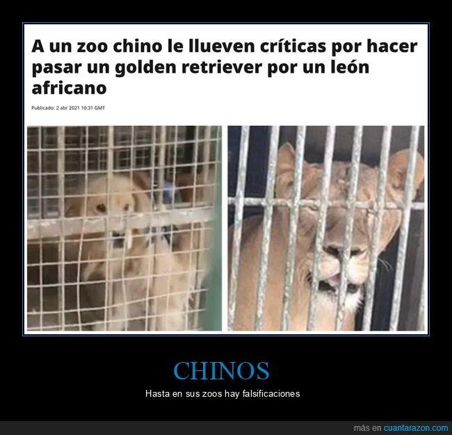 león,perros,wtf,zoo
