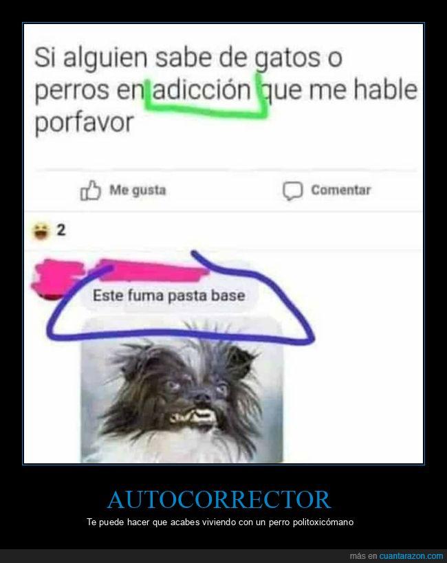 adicción,perros
