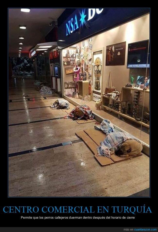 centro comercial,dormir,perros callejeros,turquía