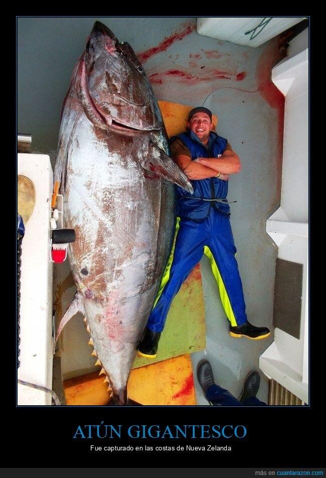 atún,gigante,pez