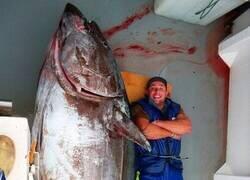 Enlace a La pesca del día