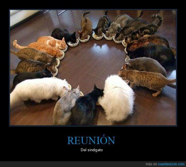 comiendo,gatos,reunión