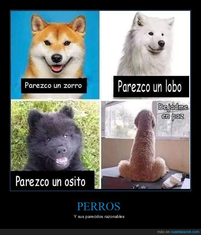 parecidos,perros