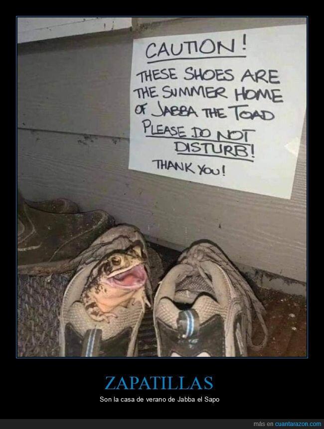 carteles,sapo,zapatillas